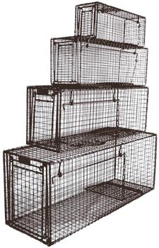 Where to find ANIMAL TRAP, LIVE  48 in Edmonds