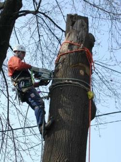 Tree Climbing Gear Rentals Edmonds Wa Where To Rent Tree